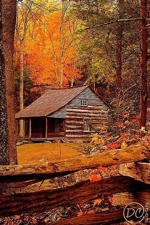 rustic cabin in the Autumn woods