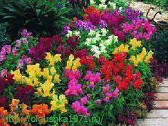 Многолетние садовые цветы, цветущие всё лето, название, описание с фото.
