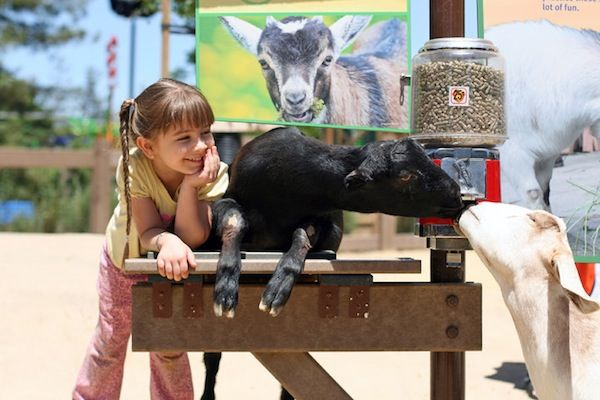 happy-hollow-zoo..link to petting and u-pick farm in Stockton