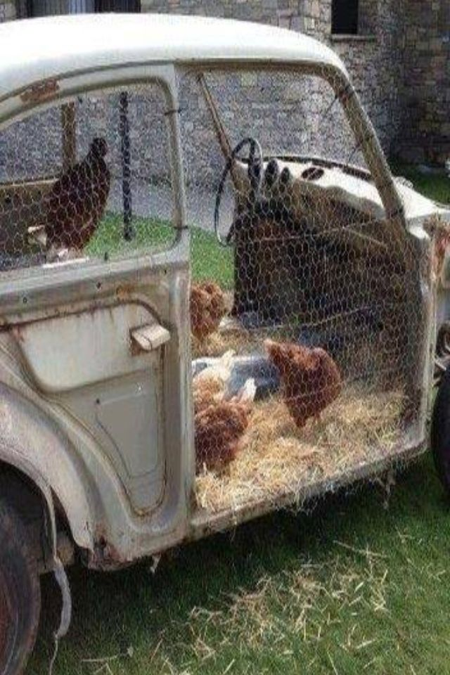 Here is a Chicken Coop that is cute as a bug!!