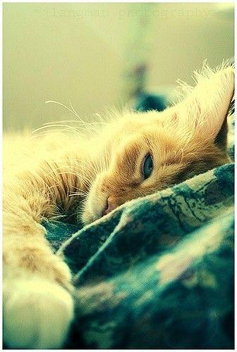 awww baby kitty.