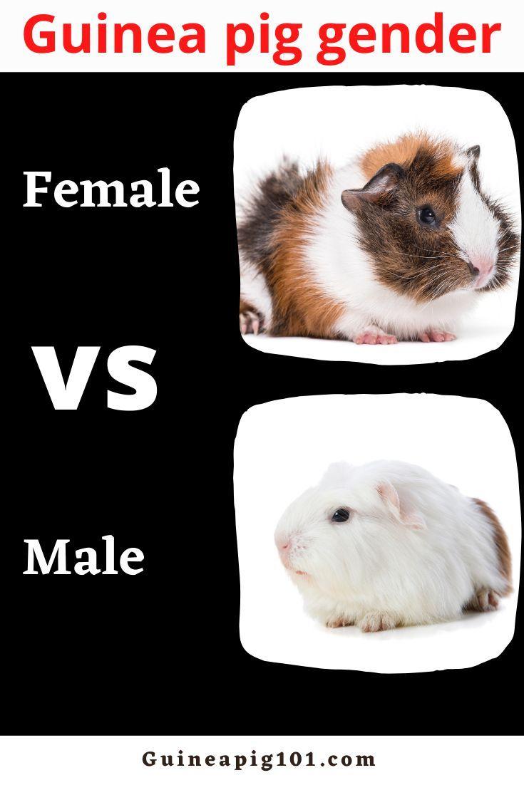 Pin On Small Fury Pets