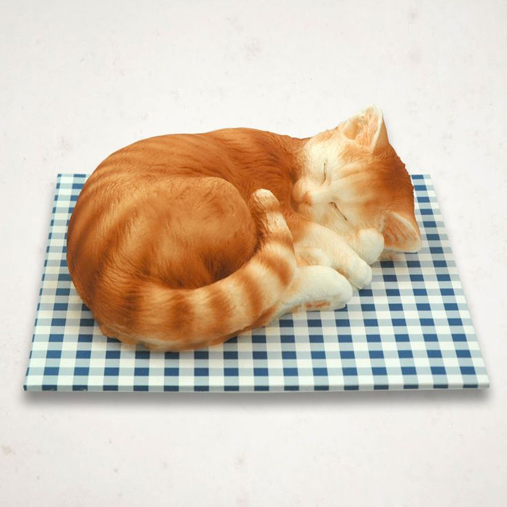 Sleeping Cat Cake