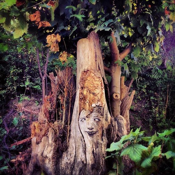 """@mrevidence's photo: """"The Forrest. #christiania #copenhagen"""""""
