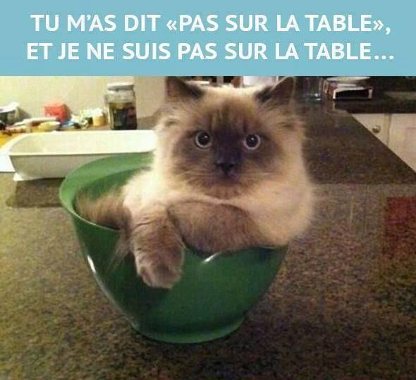 Mon chat!!