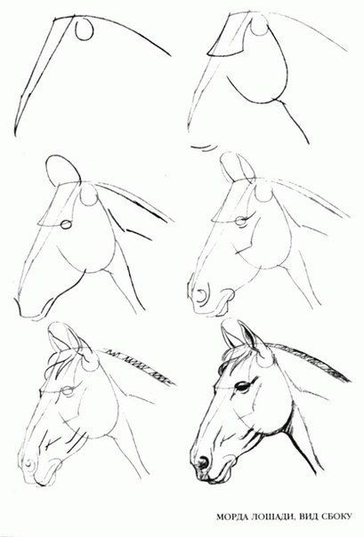 Learn to Draw Step By Step: Animal – Horse Head (S…