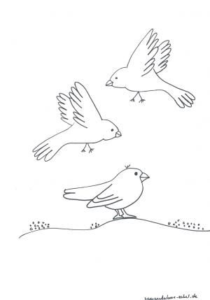 Schablonen 2ausmalen Vogel Familie Projekte Mit Kindern