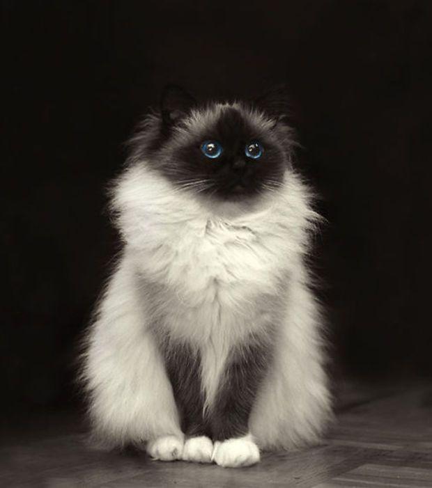 Un chaton gris émerveillé
