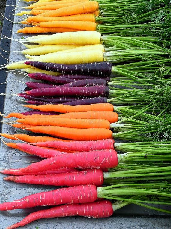 Rainbow Carrot Mix six crazy colors 250 heirloom by SmartSeeds