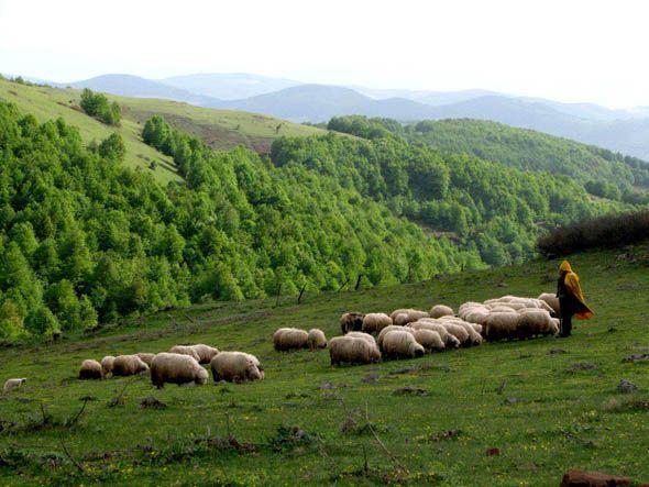 Argın Yaylası:   Akkuş-Niksar karayolu üzerinde Akkuş ilçe merkezine 3 km. mesafede bulunan yayla 1991 yılında Kültür ve Turizm bakanlığı tarafından Turizm merkezi olarak tescil edilmiştir. Bozulmamış doğal yapısı ile görülmeye değer yaylalarımız arasındadır. Kayak turizmine elverişlidir. (Ordu, Türkiye)