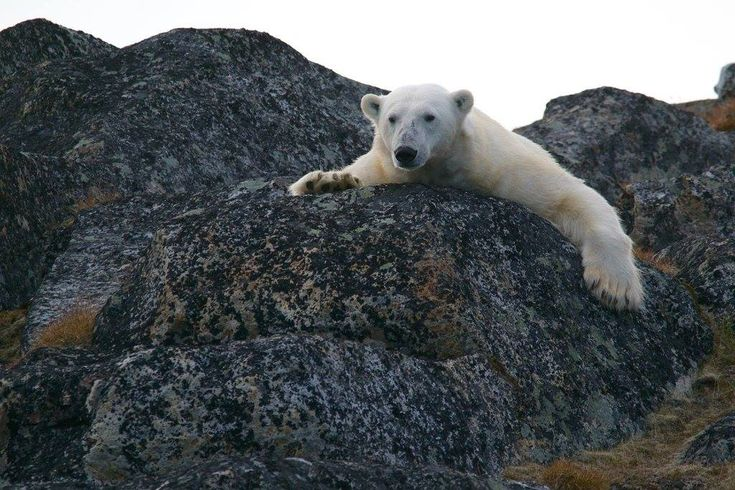 10 Ways To Successfully Plan a Trip to Svalbard