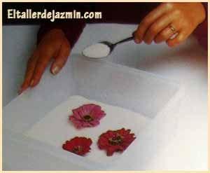 cmo secar flores secado en agua debe elegirse un sitio clido seco y oscuro