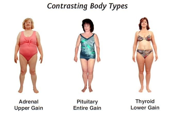 Women's body types require unique diets | Health and fitness  Women's bod...