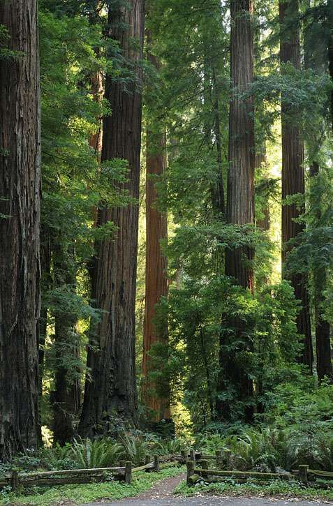 14 Best images about Richardson Grove State Park on