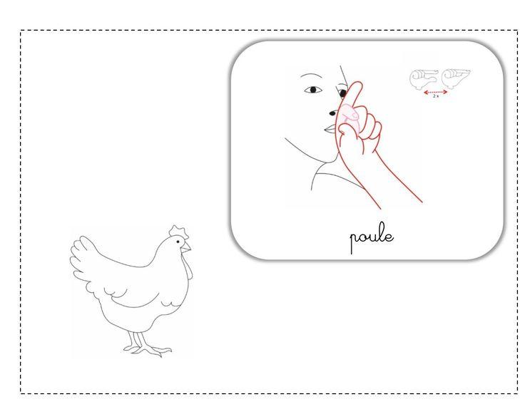 poule LSF illustration
