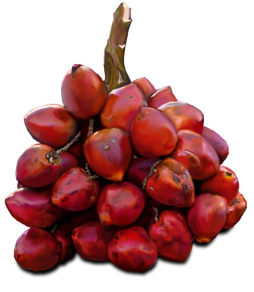 Chontaduros are also known as palm peaches.