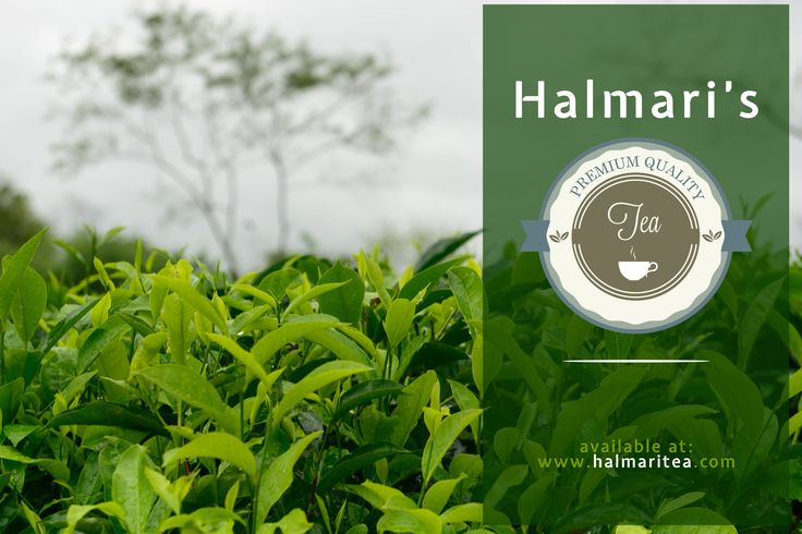 You deserve the best.  Get yourself Premium Quality Tea, right here