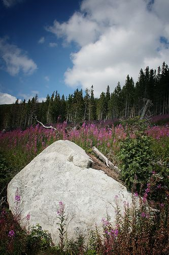 Summer in the High Tatras, Slovakia