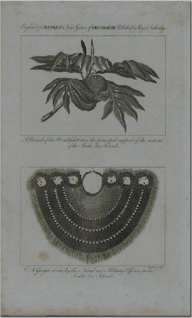 A branch of the breadfruit tree, 1776-79. Captain James cook's third voyage.