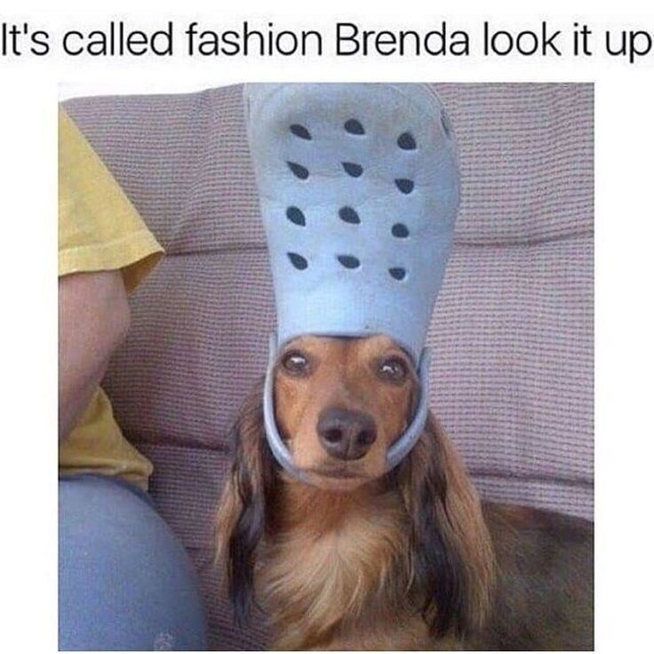 """Pets 🐶 Supplies 🐱 Memes on Instagram: """"Its fashion. You wouldn't understand 💁♀️ We just hit 1K followers! Thank you all so much …"""