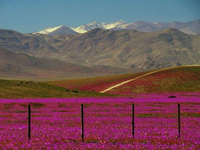 Atacama.  Septiembre  2015.