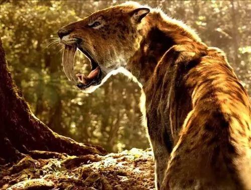 اشهر عشر اسماء حيوانات منقرضة في العالم بالصور سحر الكون Smilodon Cat Spirit Sabertooth Tiger