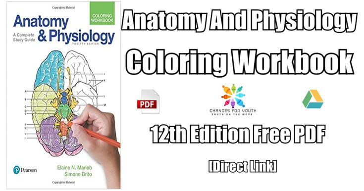 Anatomy And Physiology Coloring Book 12th Edition PDF Free Download Today.  Get Your Copy Of Anatomy And… Anatomy And Physiology, Physiology, Anatomy  Coloring Book