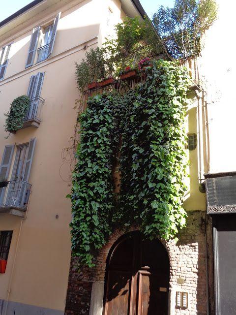 Balcone a Milano -  Foto-diario di una giardiniera curiosa