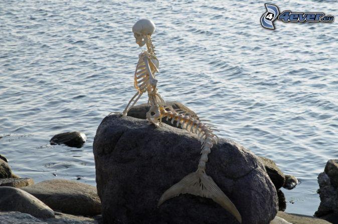 Meerjungfrau, Skelett,