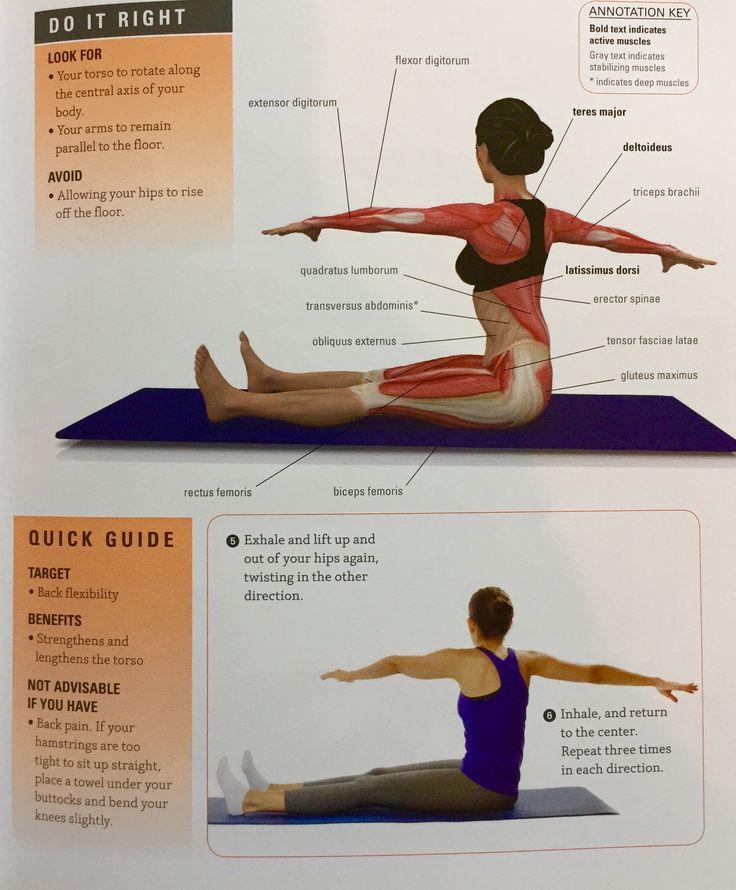 16 best Pilates Anatomy images on Pinterest   Anatomy, Anatomy ...