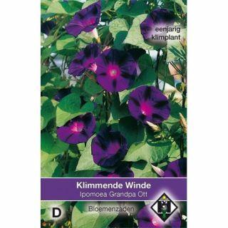 Ipomoea purpurea Grandpa Ott (zaad Klimmende Winde, donkerpaarse bloemen)