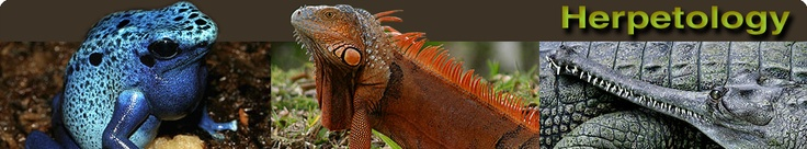 Florida Museum of Natural History: Division of Herpetology website
