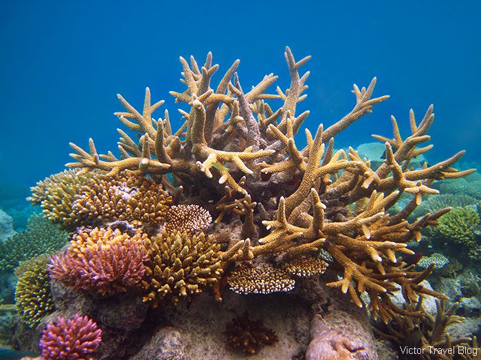 Coral Reef of the island of Funamadua, Gaafu Alifu Atoll, the Maldives. https://victortravelblog.com/2015/03/25/best-coral-reef-locations-maldives-or-great-barrier-reef/