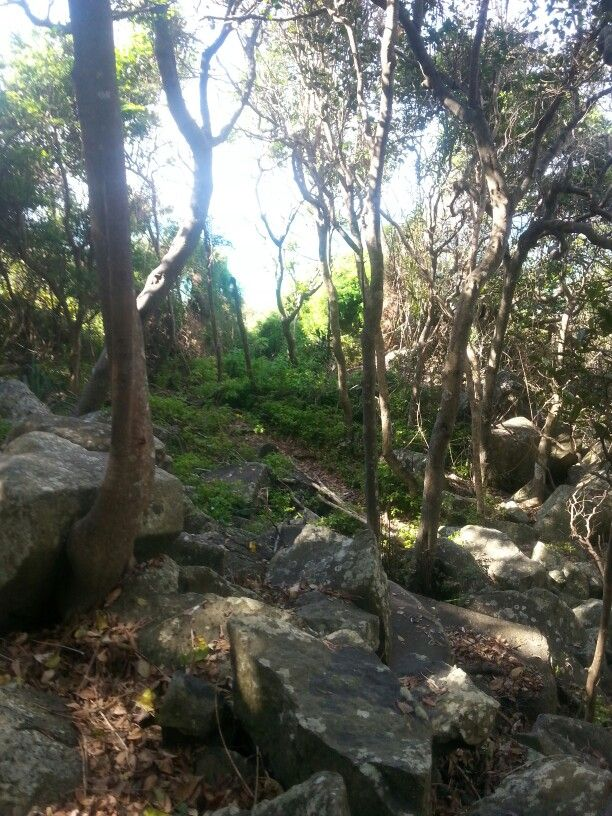 Burleigh Headlands National Park Australia