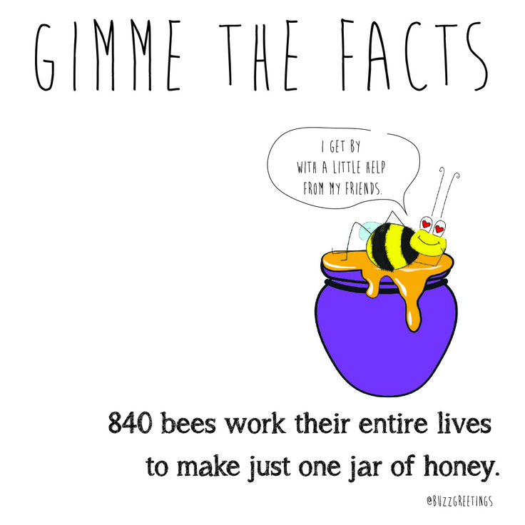 GIMME THE FACTS - Bee Facts. Bees are so important! That's why Buzz Greetings gives $1 to SAVE THE BEES Australia for every purchase made on their Etsy store. buzzgreetings.etsy.com OR follow bee @Buzz Greetings on Instagram. For more about SAVE THE BEES Australia go to beethecure.com.au Bees can visit 50-100 flowers in one trip