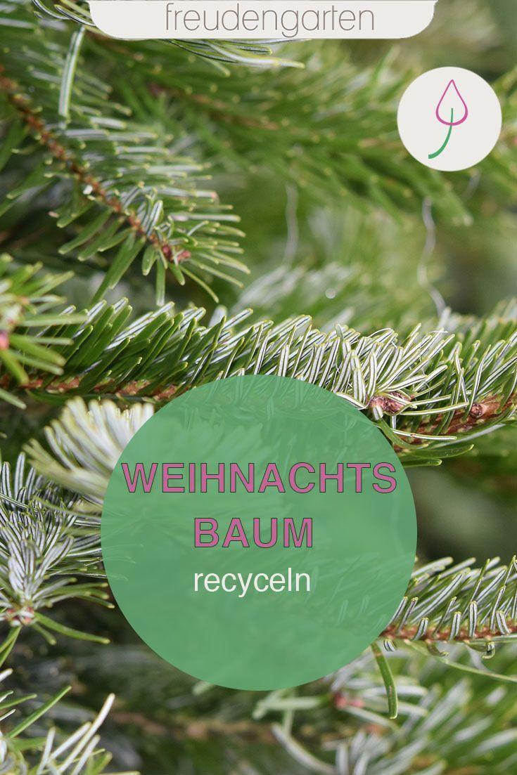 Weihnachtsbaum Recyceln Statt Entsorgen Garten Gestalten Gartenthema Bienenfreundliche Pflanzen