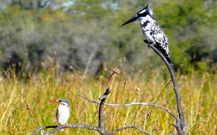 Birding safaris | RAW Botswana
