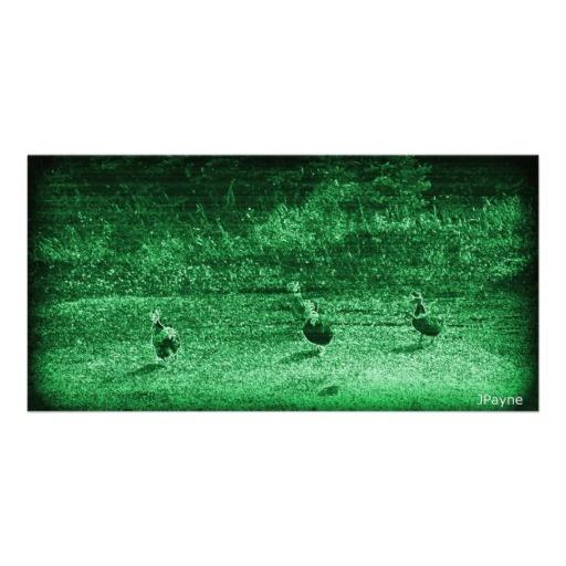 Ducks Waddling at Night Photo Card