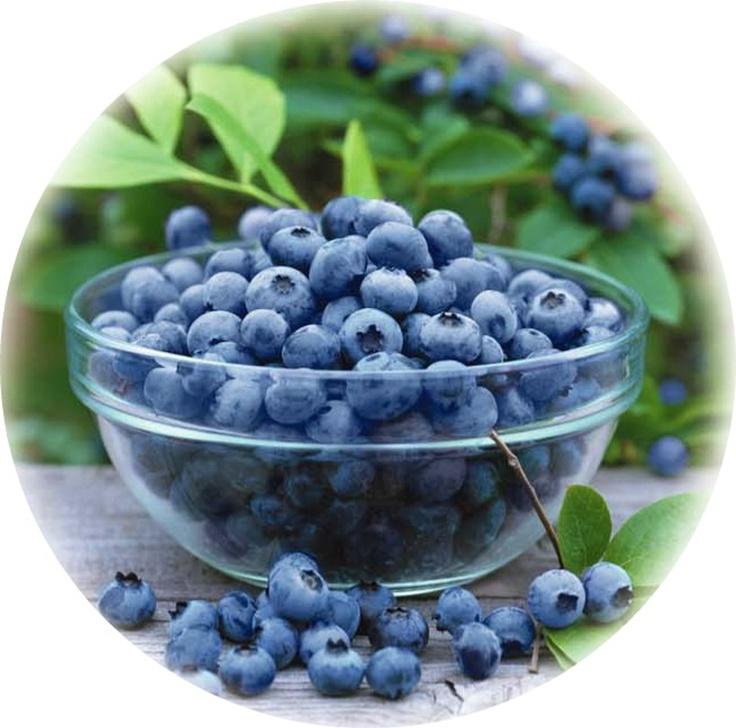 Fresh blueberries - Mamaku Blue Blueberry Experience, Rotorua - www.mamakublue.co.nz