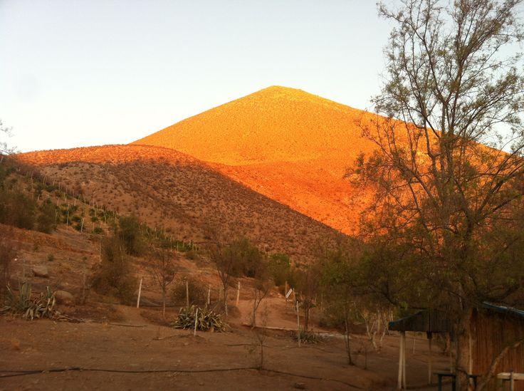 Vicuña en el Valle de Elqui. Foto de Fabián Barahona.