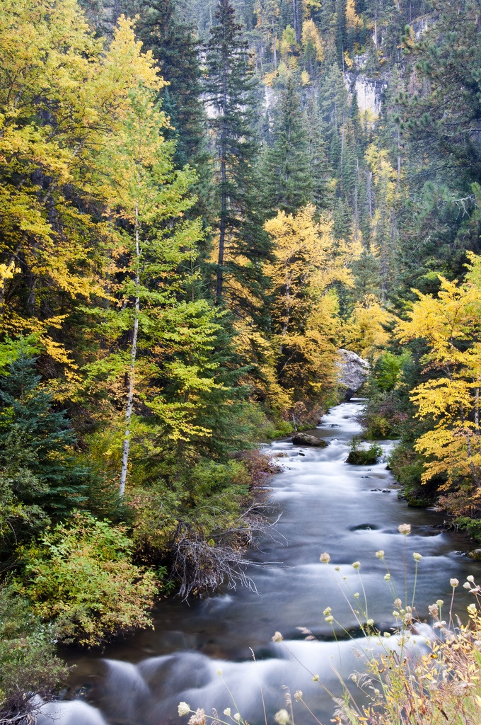 Visit the heart of Spearfish Canyon in the fall and experience all the beauty this area holds.