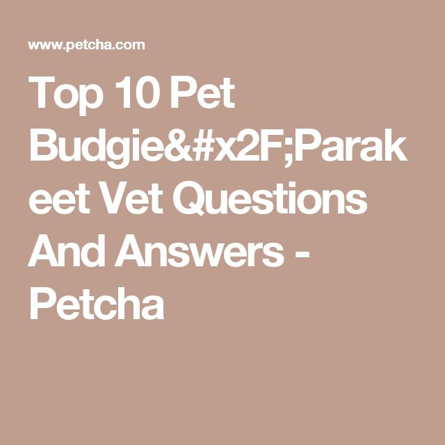 Top 10 Pet Budgie/Parakeet Vet Questions And Answers - Petcha