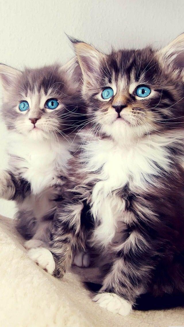 Adorable!! Also wow their eyes!