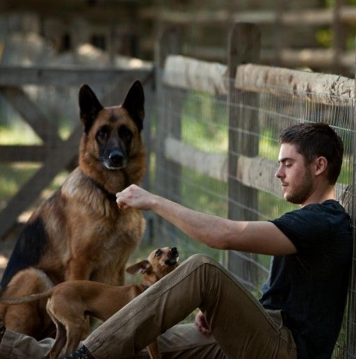 beautiful german shepard - (the lucky one movie)