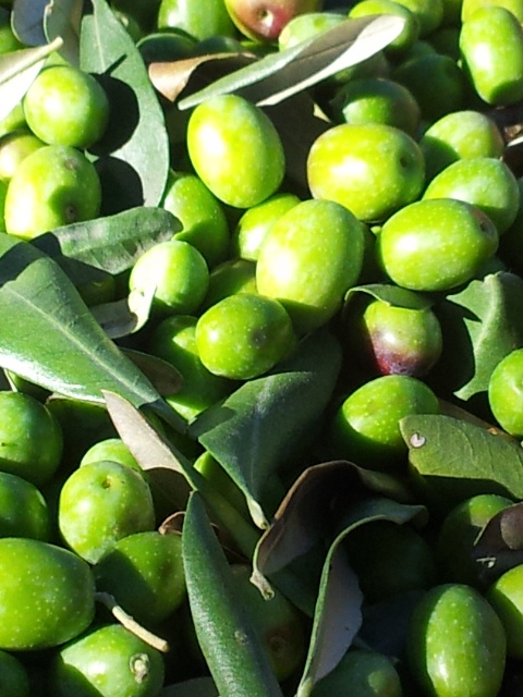 #Olives, Sardinia