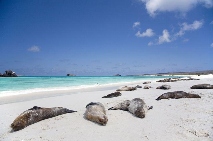 Playas de Las Galápagos, Ecuador - Playas en las que renacer