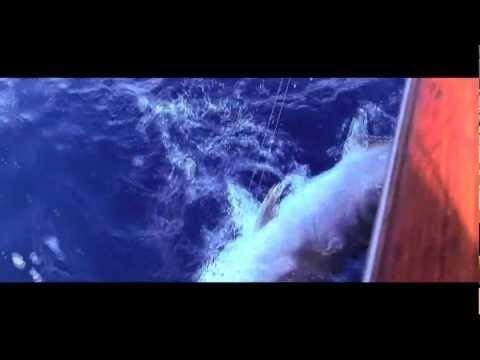 Amazing Fishing Trailer for TV show