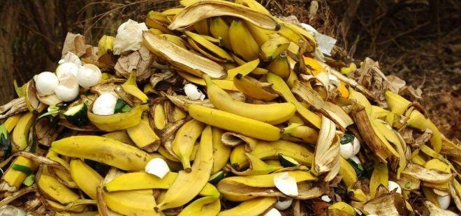 Banánové slupky do koše nepatří, proč?
