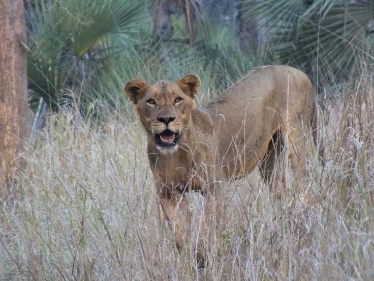 A new face to Gorongosa, how exciting is that! (photo by Tish Grant) http://on.fb.me/S3Uidt