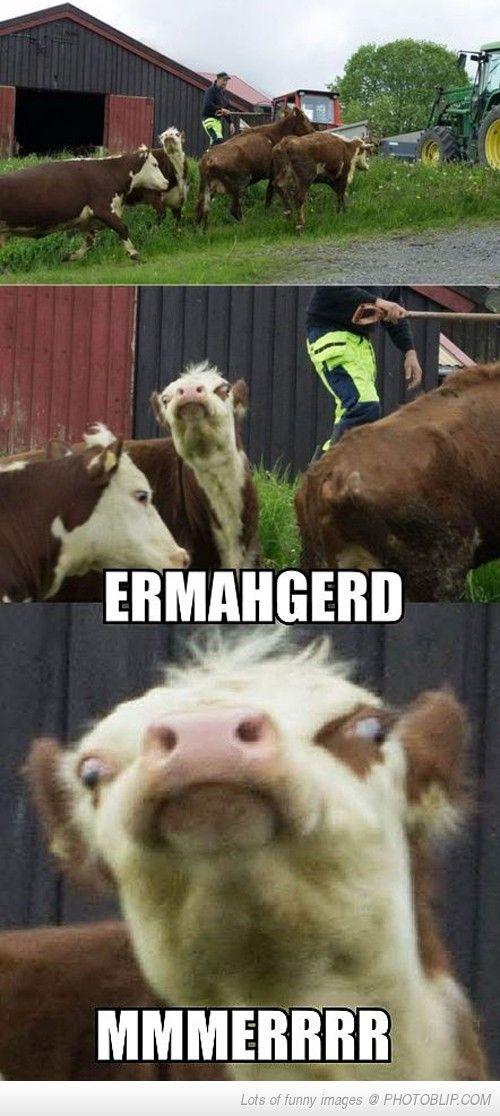 ERMAGERD!